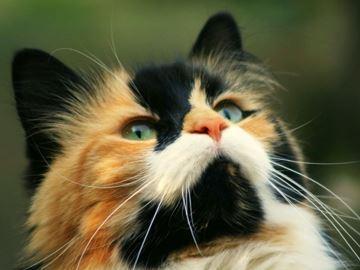 Рыжий кот приметы