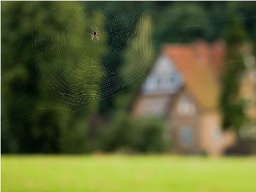 к чему паук дома