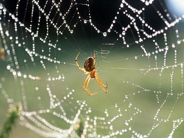Что делать если дома завелся большой паук