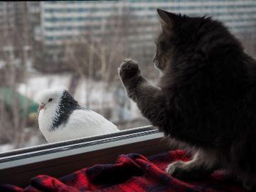 птица ударилась в стекло