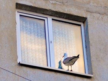 птица стучится в окно примета