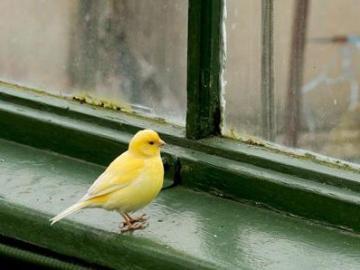 птица ударилась в окно