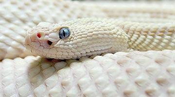 Увидеть во сне змею исламский сонник