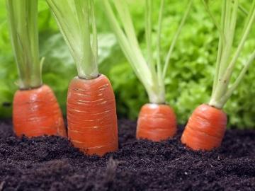Сонник приснилась морковь к чему снится морковь во сне