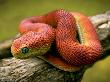 убить змею
