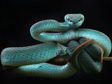 к чему снится убить змею