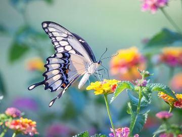 Что значит если бабочку видеть во сне thumbnail