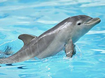 Видеть играющего дельфина во сне thumbnail