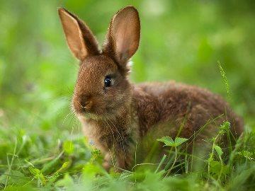К чему снятся кролики - приснился белый кролик женщине к чему сонник