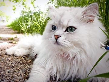 Сонник белый Котенок ? приснился, к чему снится белый Котенок во сне видеть?