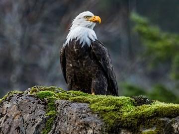 К чему снится орел летящий в небе