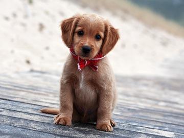 К чему снятся собаки и щенки - расскажут сонники