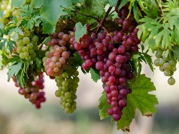 Сонник миллера к чему снится виноград