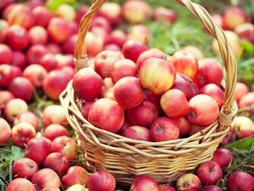 красные крупные яблоки