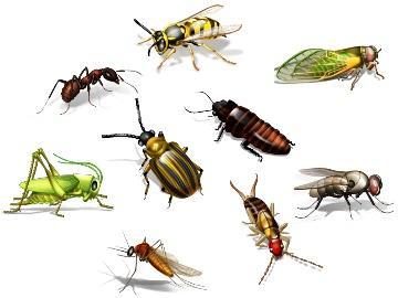 сонник жуки