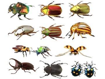 к чему снятся жуки во сне