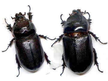 к чему снятся жуки во сне женщине