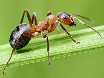 К чему снятся муравьи в большом количестве – к чему это, значение сна, толкование по сонникам