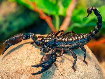 К чему снятся скорпионы кусают