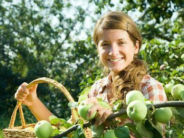 сонник собирать яблоки с дерева