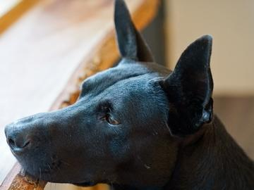К чему снится черная собака. Сонники про черную собаку во сне