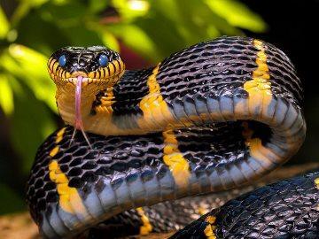 укусила змея во сне к чему