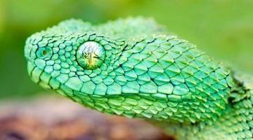 Сонник укус маленькой змеи в руку