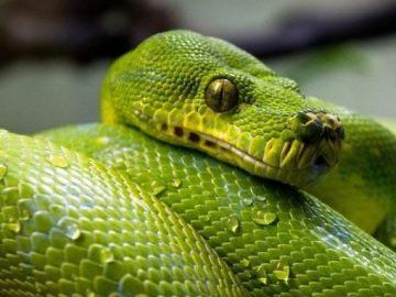 Сонник много змей к чему снится много змей во сне
