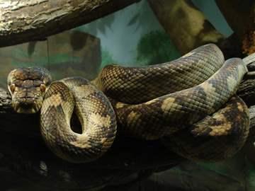 приснилась большая змея