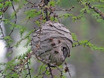 приснились осы