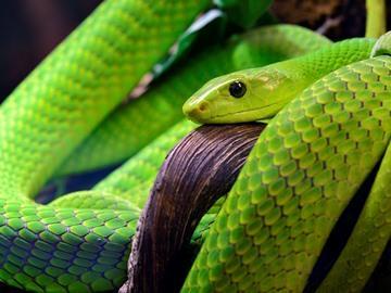 К чему снится укус зеленой змеи thumbnail