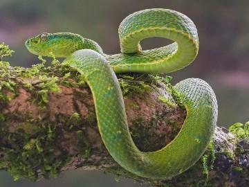 к чему снится зеленая змея женщине