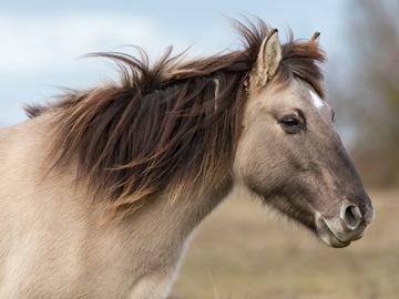 К чему снится коричневая лошадь по различным сонникам