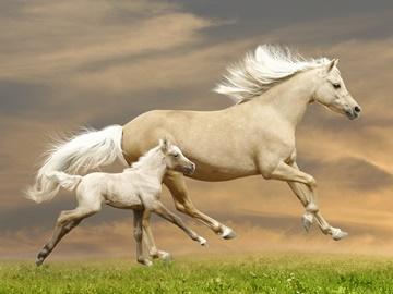 конь во сне