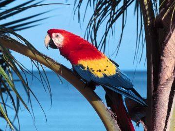 К чему снится белый попугай женщине
