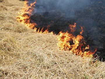 горящее сено