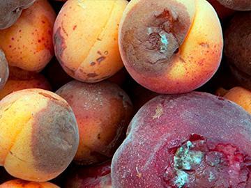 гнилой абрикос