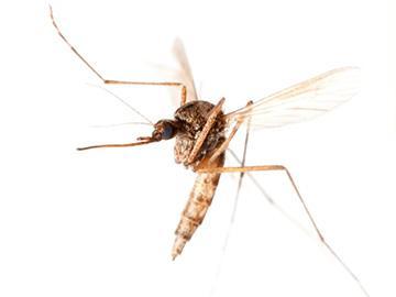 полет комара