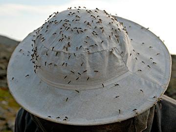 стая комаров